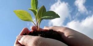 miur, ministero, consiglio, agricoltura