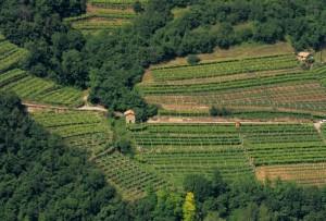 compensativa, settore agricolo, agricoltura, progetto