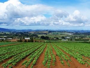 imprese agricole
