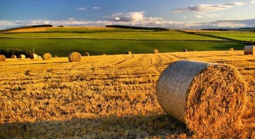 Approvato il nuovo Collegato Agricoltura: cosa cambia?