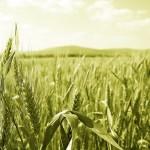 Mutui Agrari e Fondiari: istruzioni per comunicazioni con il Fisco