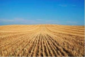 agricoli