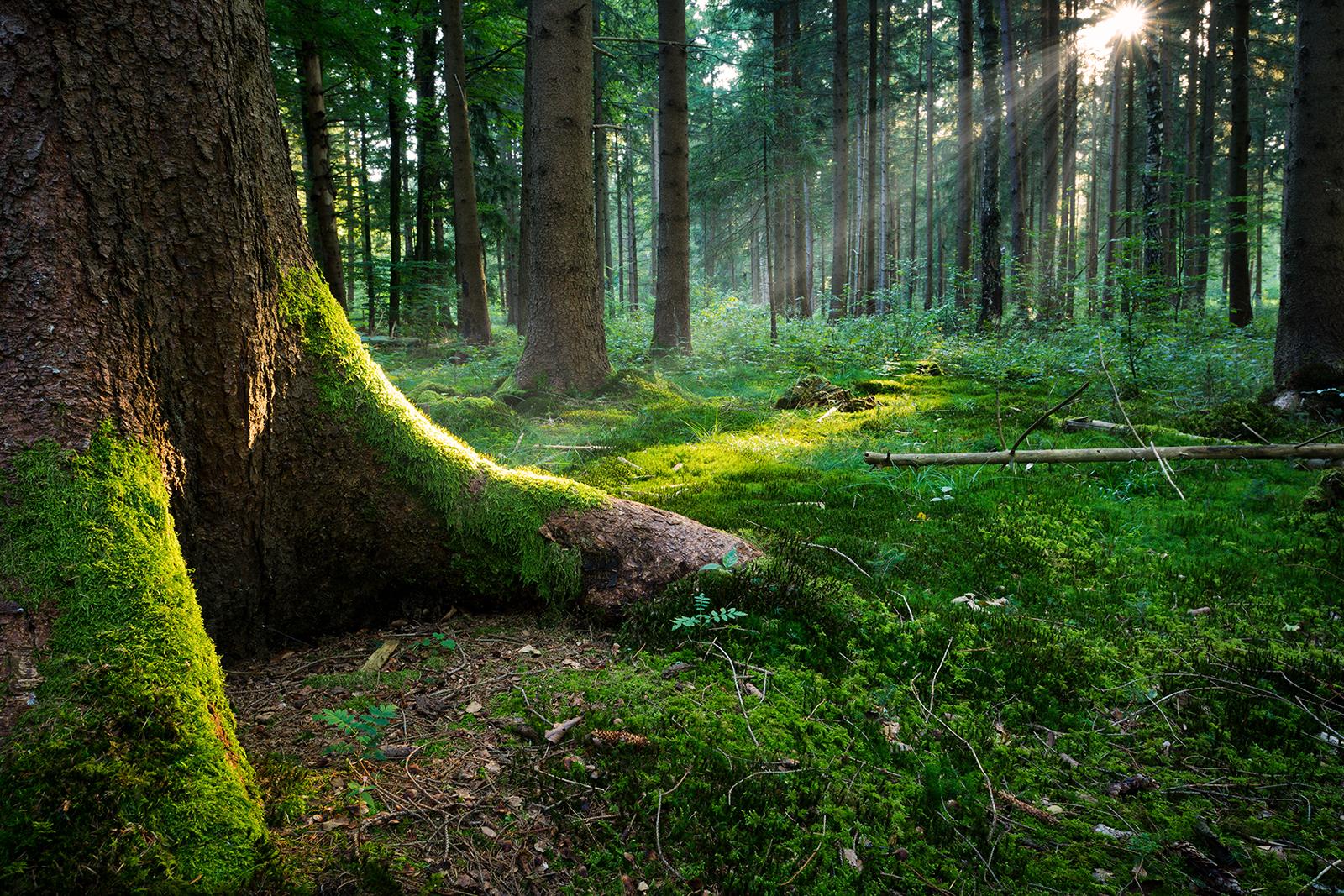 Per salvare il Pianeta basterebbe solamente salvare le foreste?