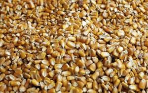 OGM: PER BRUXELLES VIA LIBERA A MAIS 1507 È INEVITABILE
