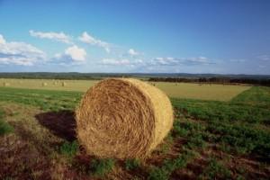 agricolturaz