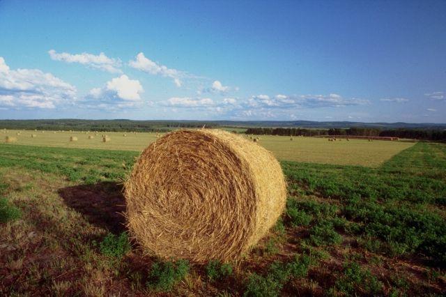 Calo degli infortuni sul lavoro nel settore dell'agricoltura