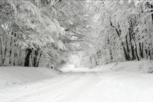 neve-strada-alberi450