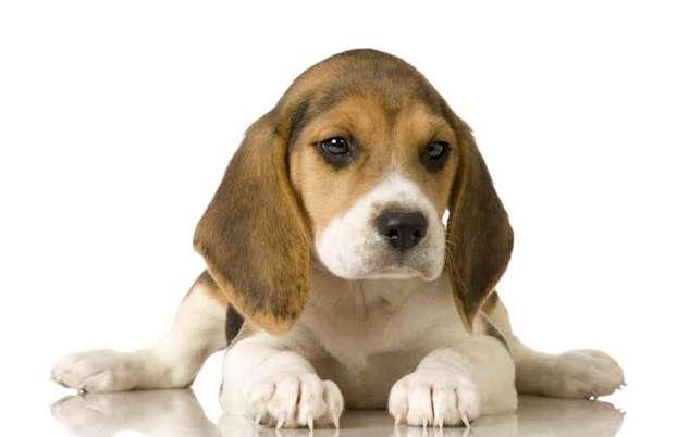 Contratto di custodia cani randagi: regole su Bollo e Registro