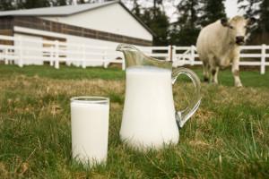 allevatori latte