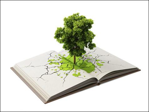 Ecosistema Scuola: i dati dell'indagine di Legambiente su edilizia, strutture e servizi
