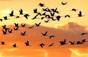 direttive habitat e uccelli