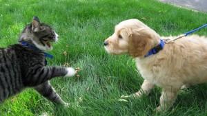 cani e gatti animali in citta