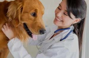 spese sanitarie e spese veterinarie