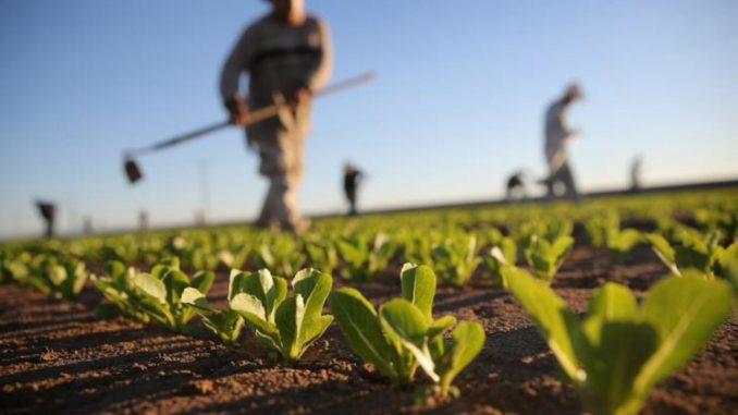 I giovani tornano alla terra: Sicilia leader per presenza nel settore Agroalimentare
