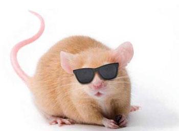 Topo - Come uccidere i topi in casa ...