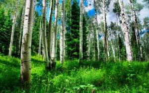 legge forestale nazionale