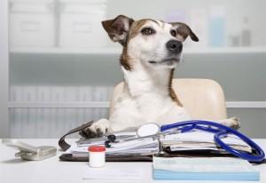 spese-veterinarie