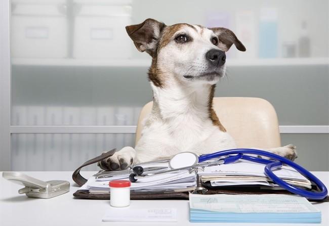 le spese veterinarie