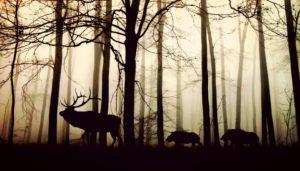 biodiversita-rischio-dossier-2018-legambiente