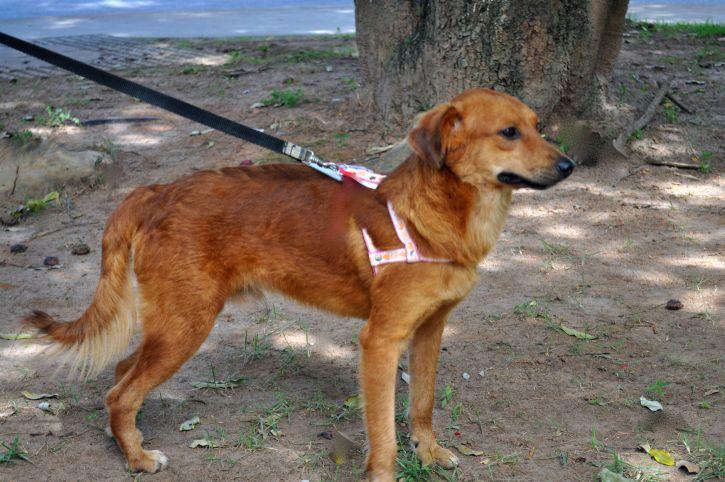 Acquisto cane guida non vedenti per familiare a carico: detrazioni?