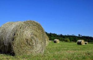 agevolazioni-imu-societa-agricole-cassazione