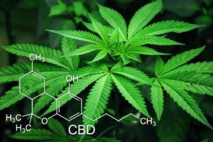 legalizzazione-cannabis-associazione-luca-coscioni