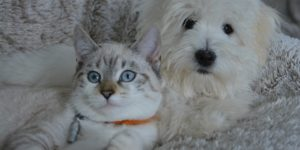 cane-gatto-stato-di-famiglia