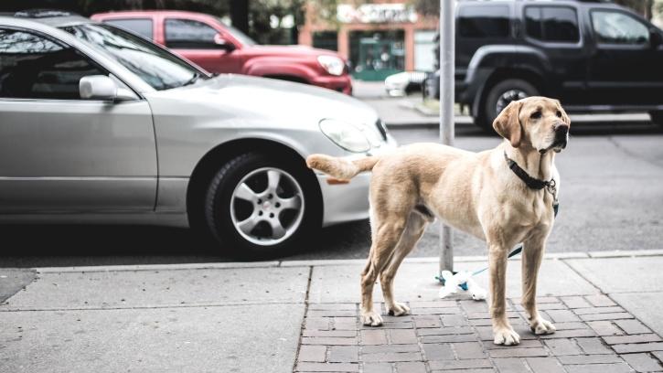 comune-di-mugnano-feci-cani-in-strada