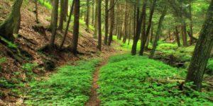 criteri-ambientali-minimi-pa-report-associazione-comuni-virtuosi