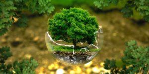 dichiarazione-unica-ambientale-2019