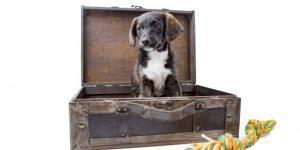 passaporto-cane