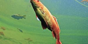specie-ittiche-alloctone-fiumi-governo