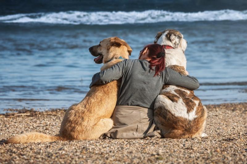 cani-in-spiaggia