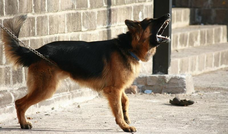 intrusione-casa-cane