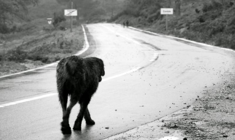 abbandono-animali