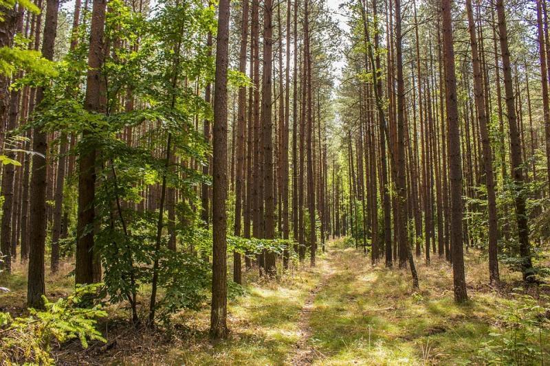 cambiamenti-climatici-proteggere-foreste