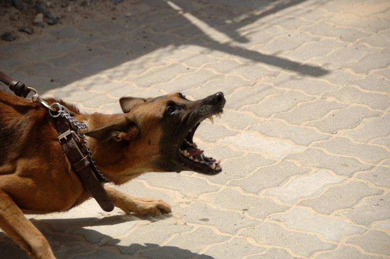 tutela-incolumita-pubblica-aggressione-cani