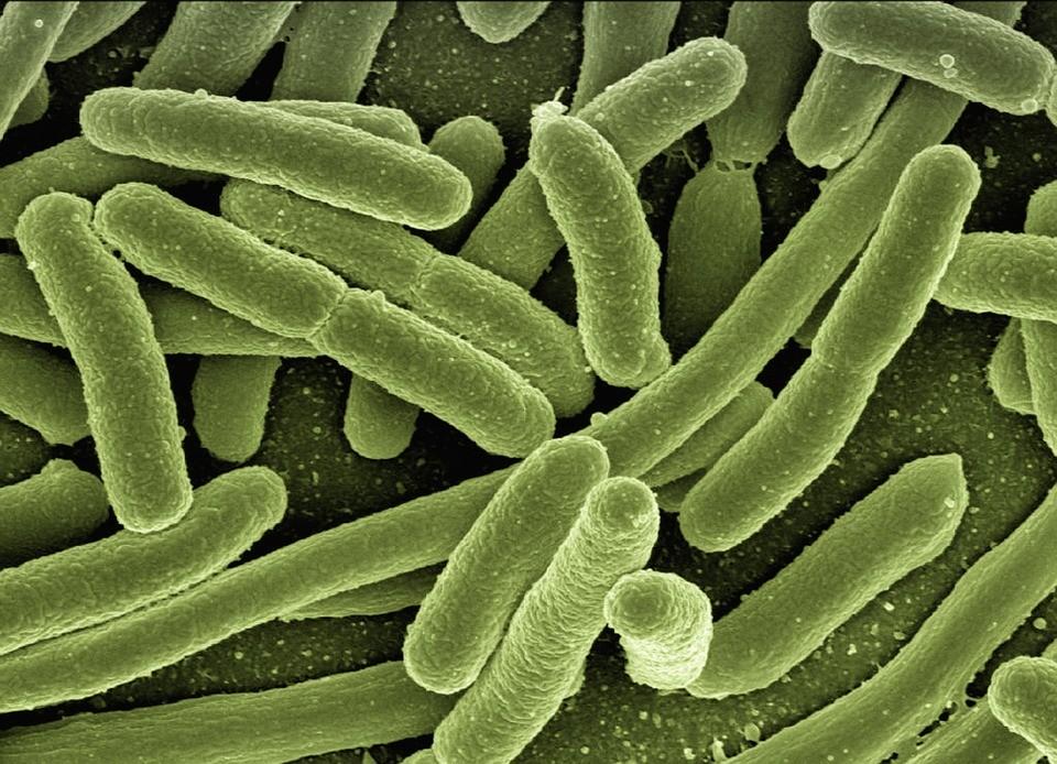batteri-fecali-acqua-minerale