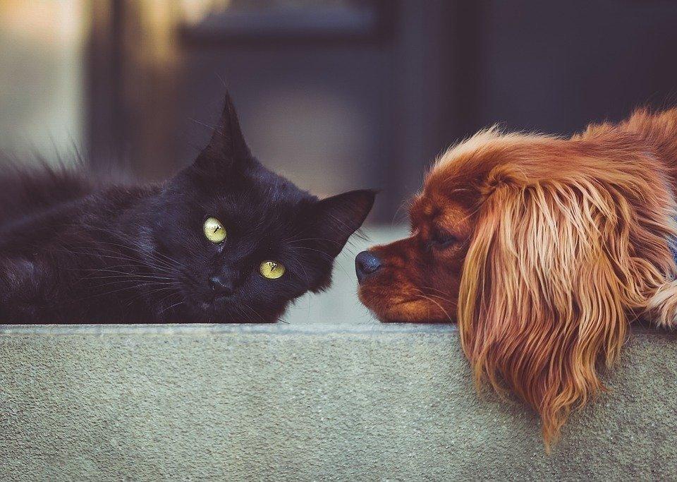 ospedali-aperti-cani-gatti-petizione
