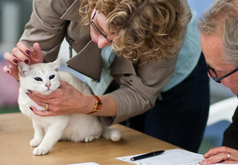 farmaci umani per animali domestici