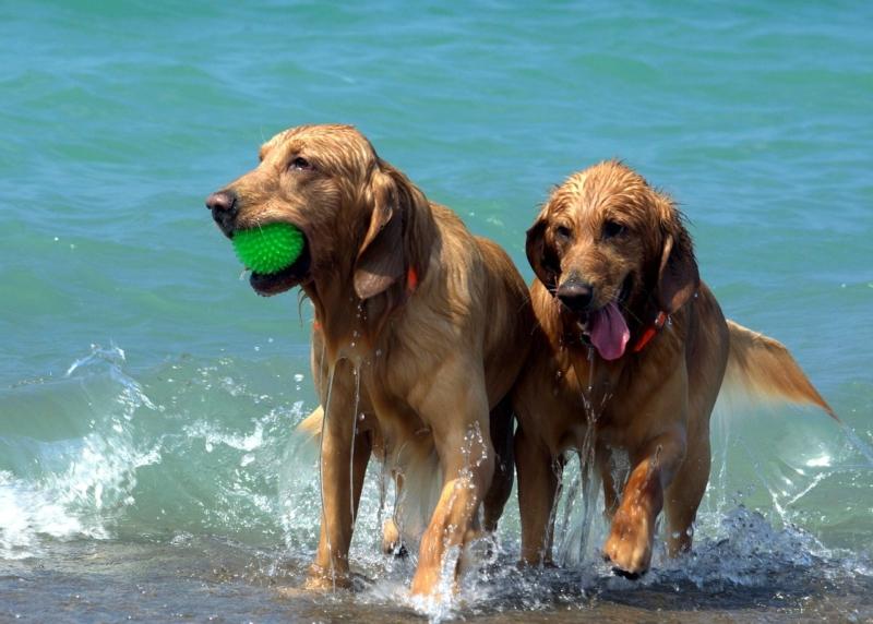 animali-in-vacanza