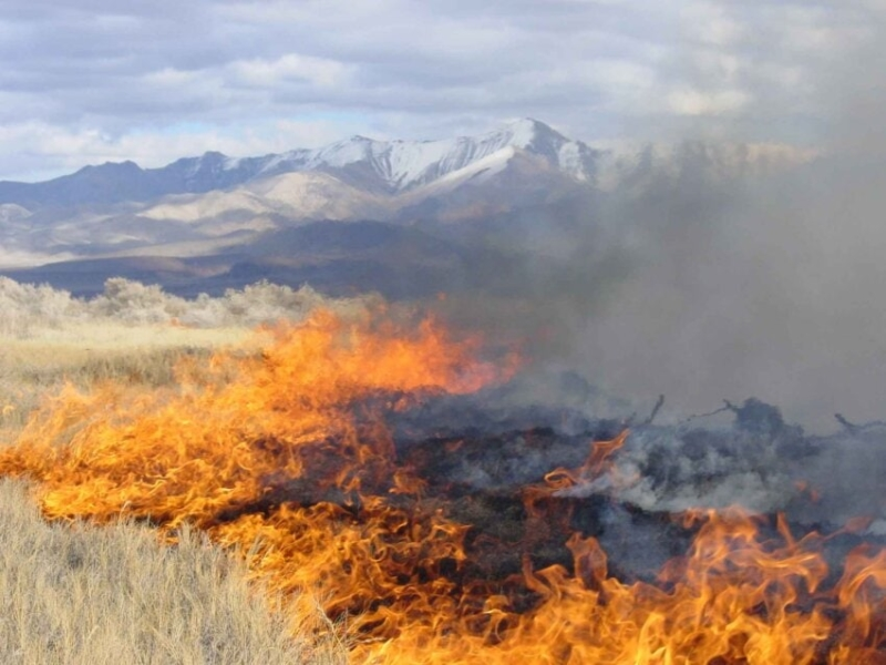 decreto-legge-incendi-risorse-comuni-interventi-prevenzione