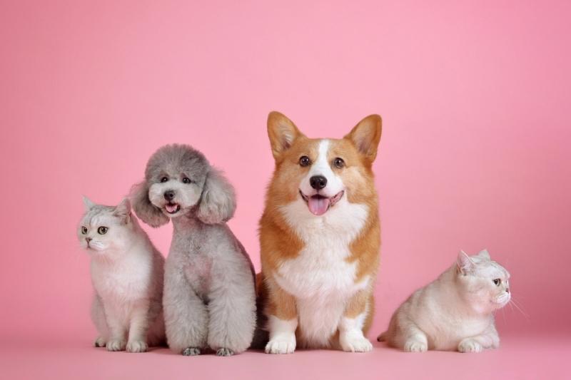 assicurazione animale domestico